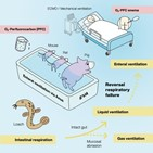 산소,공급,장치,호흡,돼지
