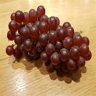 과일,프리미엄,딸기,당도,포도,멜론,재배,국산,일반,샤인머스캣