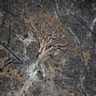 파괴,브라질,아마존,열대우림,무단,지난해,서한,법안