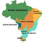 삼림,마타,치카,브라질,파괴