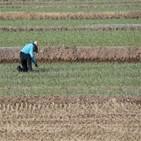 농가,지원금,피해,지원,대상,소규모,소득