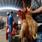 중국,조류인플루엔자,바이러스,감염,인체,조류,환자