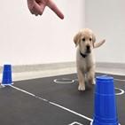 강아지,사람,간식,실험,연구진