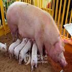 바이러스,감염,돼지독감,대만
