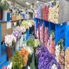구매,식물,그린,메인,캐리어,토니,줄기,크기,커피
