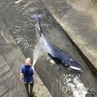 실험,밍크고래,노르웨이,이번,고래
