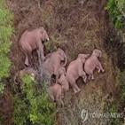 코끼리,민가,중국
