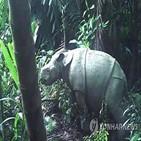 국립공원,새끼,자바코뿔소,코뿔소,우중쿨,마리