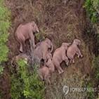 코끼리,최근,당국