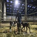 금지,가축,사료,광우병,반추동물,사용,영국