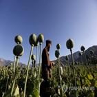 아프간,마약,헤로인,탈레반,인도,생산,아편,양귀비