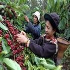 커피,근로자,베트남,생산
