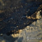 유출,기름,헌팅턴비치,사고,해변