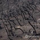 가뭄,가장,캘리포니아,올해,대기,최악