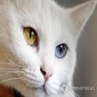 고양이,길고양이,단체,20만